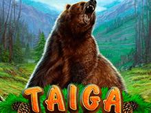 В клубе Вулкан играть в Тайга
